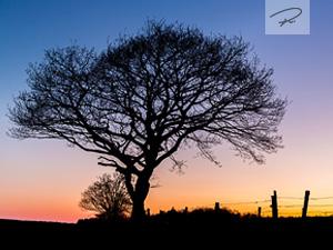 Der Baum zum Sonnenuntergang