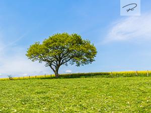 Frühlingswiese in der Eifel
