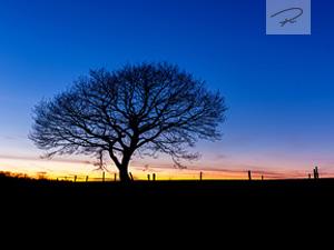Baum Silhouette im Sonnenuntergang