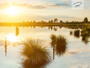 Sonnenuntergang im Hochmoor
