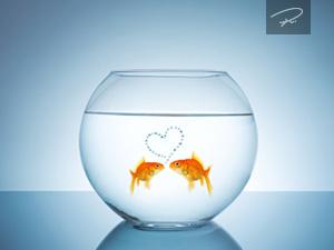 Verliebte Goldfische