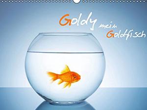 Goldy - mein Goldfisch (Wandkalender 2016 DIN A4 quer)