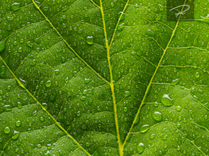 Grünes Blatt mit regentropfen