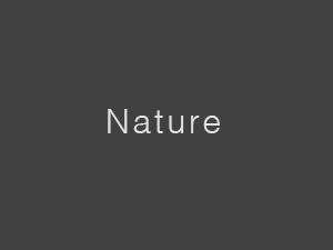 Fotografien - Kategorie - Nature - Landwirtschaft - Blatt - Tropfen - Blume - Baum - Umweltschutz