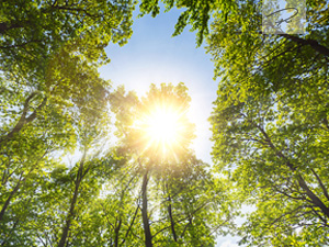 Sonne strahlt in den Wald