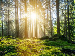 Panorama of a beautiful forest at sunrise : Stockfoto oder Stockvideo und Fotos, Bilder, Stockmedien von rcfotostock | RC-Photo-Stock